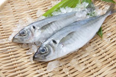 draining: Horse mackerel