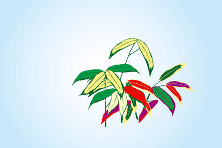 lucky bamboo: Bamboo leaves
