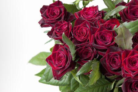 rosa negra: Blackbacara Rose