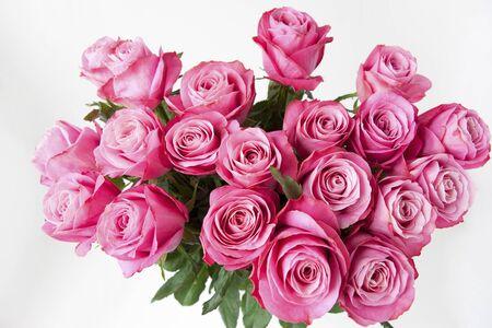 장미 아름다움 바이오 Gers 스톡 콘텐츠 - 46267986