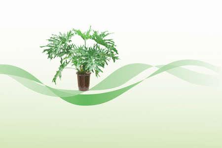 feuillage: Les plantes � feuillage