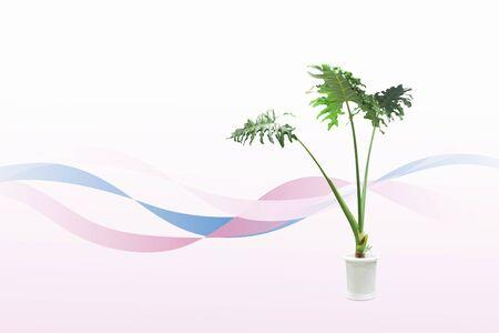 feuillage: Foliage plants