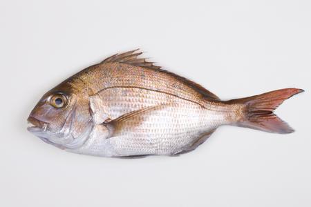 bream: Natural Red sea bream