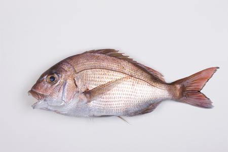 sea bream: Natural Red sea bream