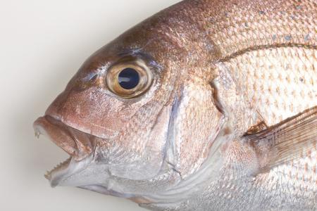 daurade: Natural Red sea bream
