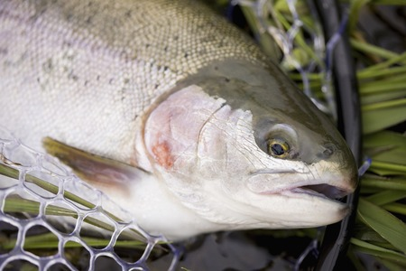 fished: Rainbow Trout fished