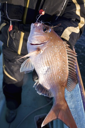 fished: Fished red sea bream