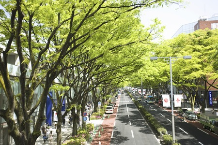 Fresh green Omotesando