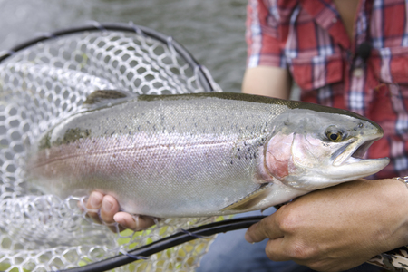 fished: and fished steelhead rainbow trout Stock Photo