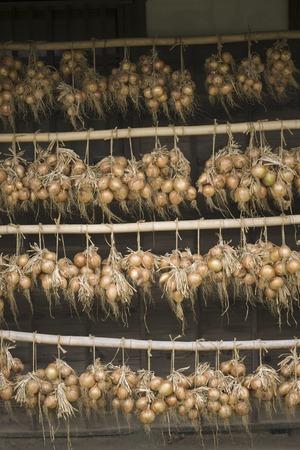 mass storage: Onion hanging