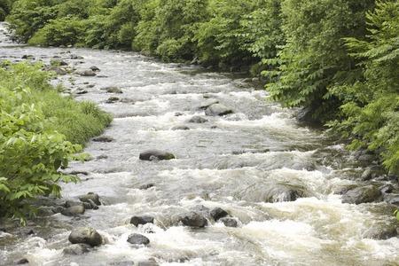 turbidity: Swollen river in the rain