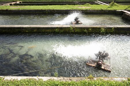 fish farm: Fish farm of trout