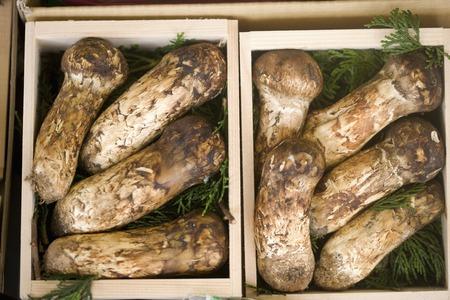 expensive food: Tricholoma Matsutake