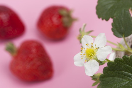 grime: Strawberry flowers