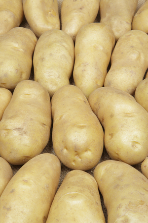 spud: May Queen Stock Photo