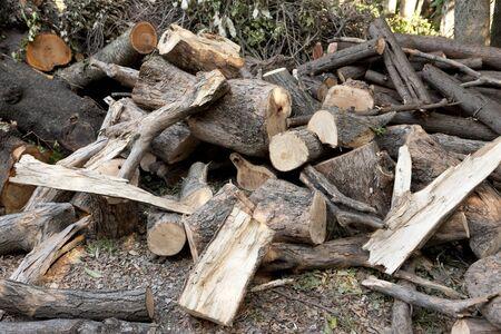 has been: Felling has been trees