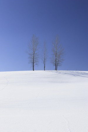 wood pillars: Snowscape and Namiki
