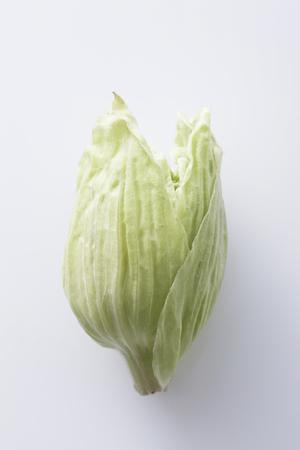petasites: butterbur sprout