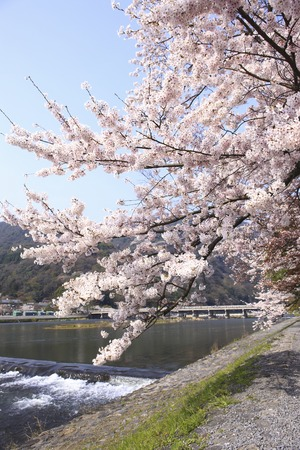 Arashiyama in spring photo