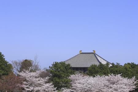 todaiji: Sakura and Todaiji of Nara Park