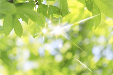 Sparkling fresh green leaves