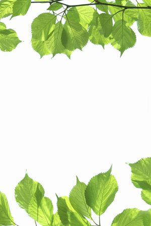 leaves frame: Verde fresco deja el marco