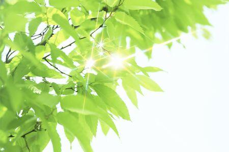 Sparkling fresh green leaves