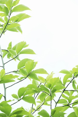 日光と新鮮な緑の葉