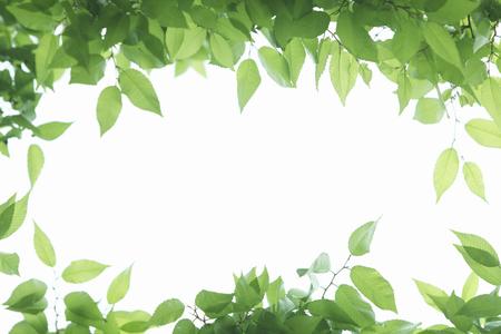 Sunlight and fresh green frame