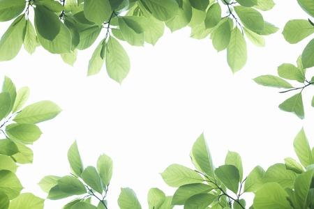 新鮮な緑の葉のフレーム 写真素材