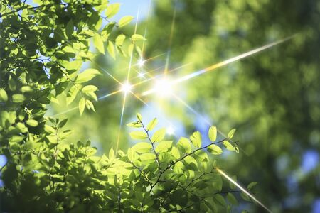 scintillation: Fresh green and sparkle