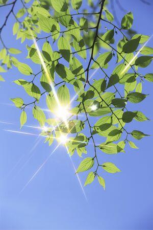 cielos azules: Cielos azules y brillo verde