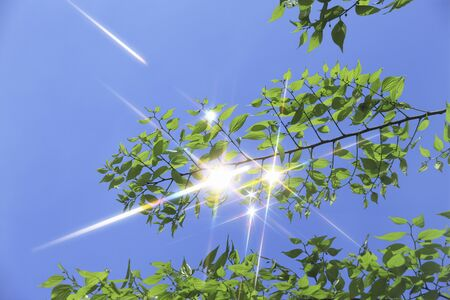glimmer: Blue skies and green sparkle