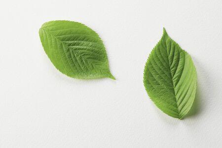신선한 녹색 흰색 다시 잎 스톡 콘텐츠