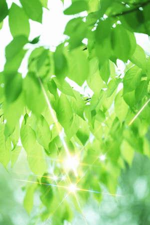 glimmer: Green glittering