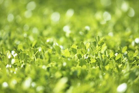 gleaming: Fresh green leaves