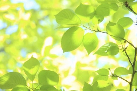 Sunlight and fresh green leaves 版權商用圖片 - 40072084
