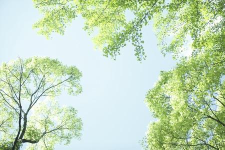 nuke plant: Fresh green leaves and sky