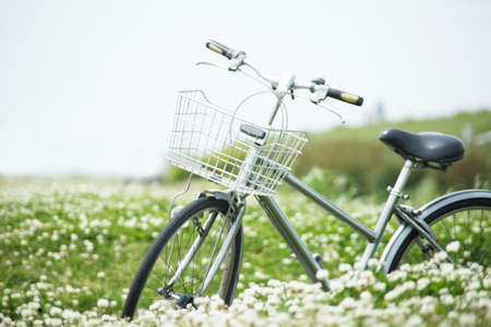 trifolium repens: Shirotsume grass and bicycle