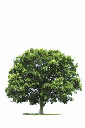 One tree Stock Photo
