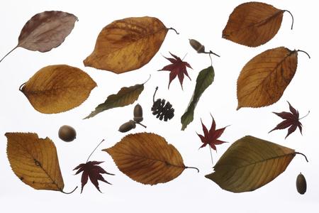 dode bladeren: Dode bladeren materiaal