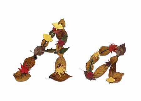 hojas secas: Carácter de hojas secas, de espalda blanca Foto de archivo