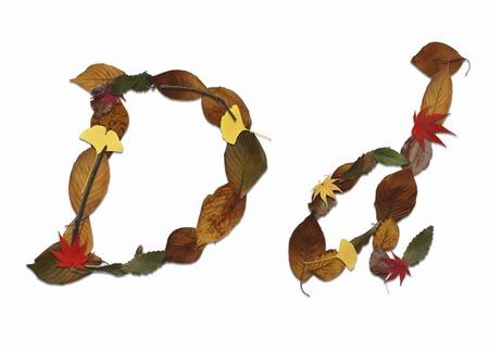 乾燥した葉、白バックの文字