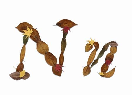 乾燥した葉、白い背中の文字