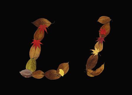 hojas secas: Car�cter de hojas secas, fondo negro