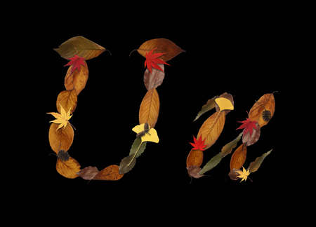 synthesis: Character of dry leaves, black background