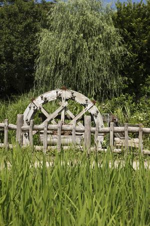 waterwheel: Waterwheel and paddy Stock Photo