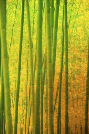 mixed forest: Gold folding screen and bamboo background