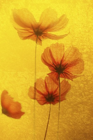 money cosmos: Gold folding screen and a cosmos of background Stock Photo