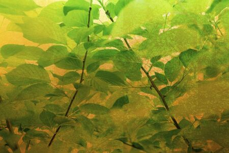 Gold folding screen and a fresh green background